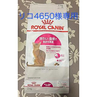 ROYAL CANIN - ロイヤルカナン 生後12ヶ月齢から7歳まで 食事にこだわりがある成猫用