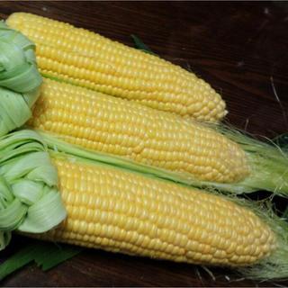 兵庫県丹波市産 とうもろこし(野菜)