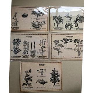 植物 ポストカード(写真/ポストカード)