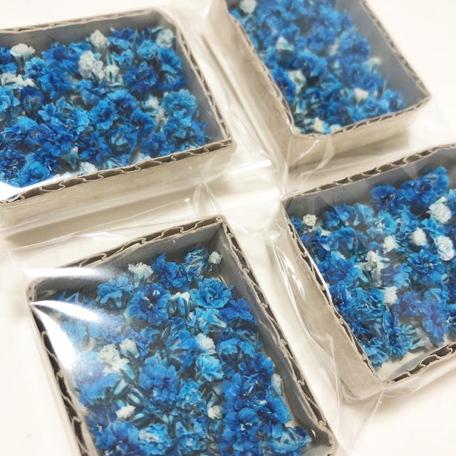 かすみ草 ドライフラワー ブルー&ホワイトmix 蕾入り ハンドメイドのフラワー/ガーデン(ドライフラワー)の商品写真