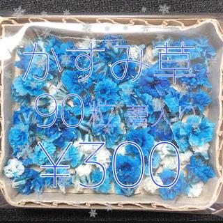 かすみ草 ドライフラワー ブルー&ホワイトmix 蕾入り(ドライフラワー)