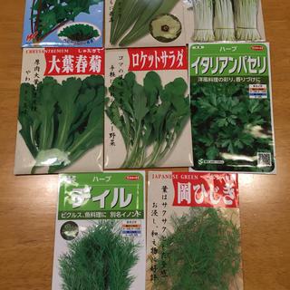 野菜の種 6種類 家庭菜園(野菜)