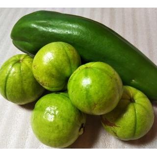 『グァバ&青パパイヤ 』 果物&野菜 サラダ利用可能品種(フルーツ)