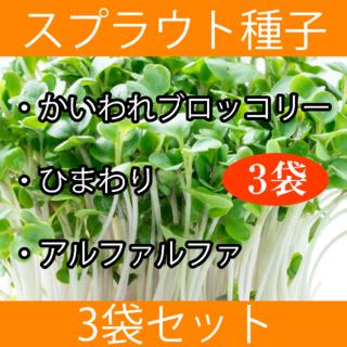 スプラウト種子まとめ買い3袋セット(野菜)