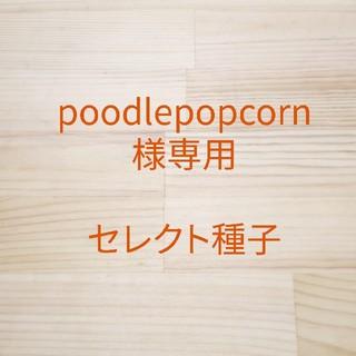 poodlepopcorn様専用 セレクト種子(野菜)