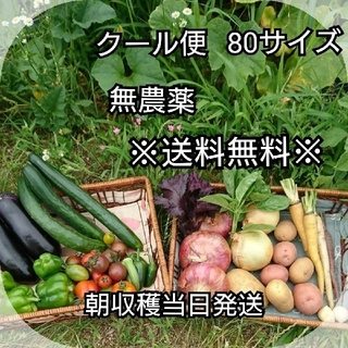 7/8本日収穫分!【クール便】朝収穫当日発送!無農薬野菜 80サイズ 送料無料!(野菜)