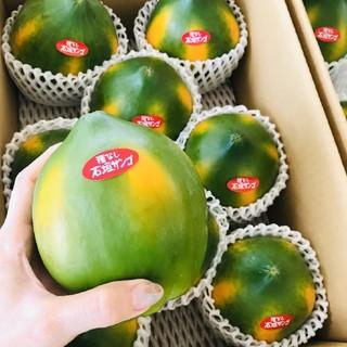 【石垣島産 フルーツパパイヤ】 1玉  350g