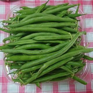愛媛県産  いんげん豆  1㎏(野菜)