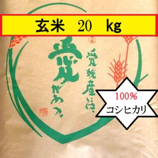 お米 令和元年 愛媛県産コシヒカリ 玄米 20㎏