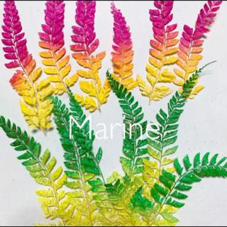 夏カラー ヒメワラビ パイナップルカラー 12枚 ハーバリウム花材(ドライフラワー)