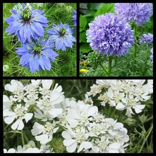 花の種☆3種セット B(その他)