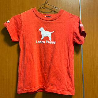 ラブラドールリトリーバー(Labrador Retriever)のキッズ*Tシャツ*ラブラドールリトリバー*6Y(Tシャツ/カットソー)