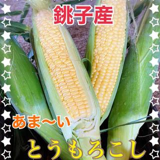 千葉県産甘ーい とうもろこし7月12日発送分(野菜)