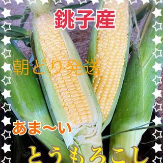 千葉県産甘ーい とうもろこし7月12日発送(野菜)