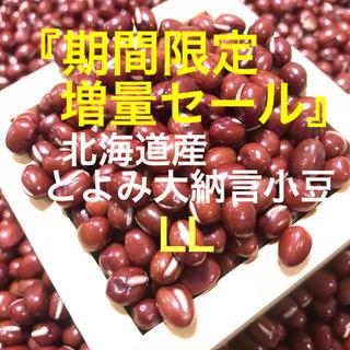 利益分還元!この大きさって何?北海道産 とよみ大納言小豆 800g+100g(野菜)