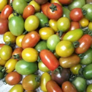 マウロの地中海ミニトマト!!(野菜)