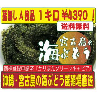 沖縄 宮古島 直送!海ぶどう1キロ!茎なしA良品!商標登録申請済の海ぶどうです!(野菜)