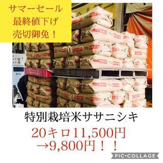 サマーセール✼最終値下げ✼宮城県産ササニシキ20キロ(米/穀物)