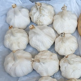 無農薬ニンニク12個(野菜)