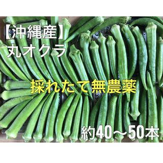 沖縄産 初物 丸オクラ 40〜50本 無農薬 (野菜)