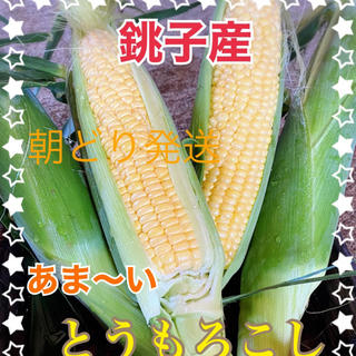 千葉県産甘ーいとうもろこし7月12日分(野菜)