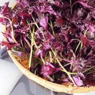 赤紫蘇ネコポス満タン(野菜)