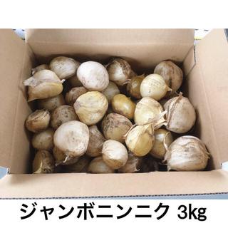 ジャンボニンニク 3㎏(野菜)