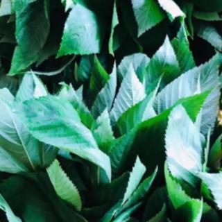 モロヘイヤ 200g(野菜)