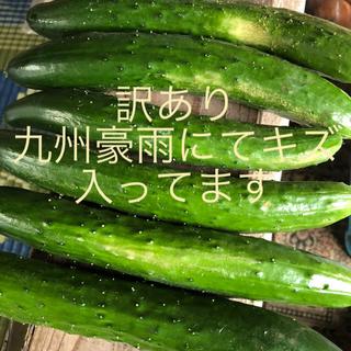阿蘇のきゅうり 訳あり1.5kg(野菜)