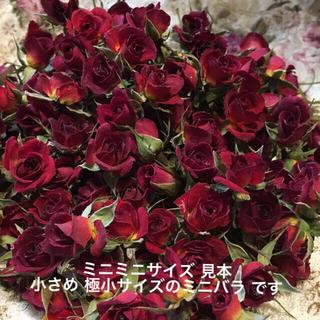 ミニミニ薔薇★ミニバラ ドライフラワー★20輪セット+おまけ2輪付き★小さな花(ドライフラワー)