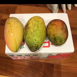 マンゴー  沖縄産 レッドキーツ キンコーマンゴー (フルーツ)