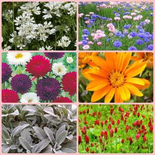 花種6種セット(その他)