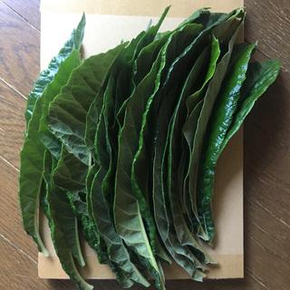 びわの葉 20枚(120 g以上)(フルーツ)