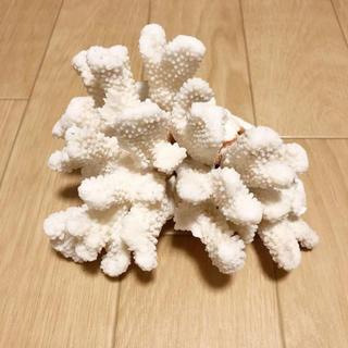 ZARA HOME - 天然サンゴの置物 白サンゴ