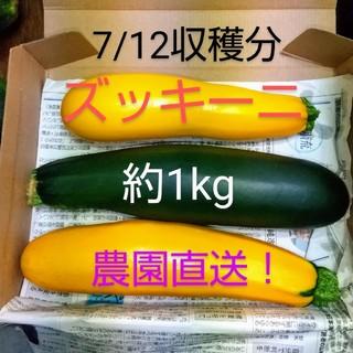 ズッキーニ(7/12収穫分)(野菜)