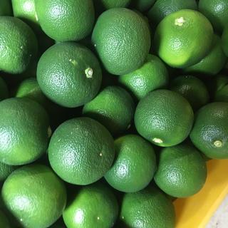 徳島県産 ハウスすだち 6キロ 格安(野菜)