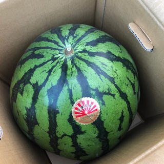 特売!超大玉!千葉県産まるあさスイカ6L良⑤(野菜)