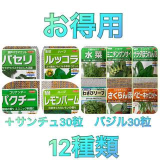 野菜の種・ハーブの種12種類 家庭菜園 プランター(野菜)