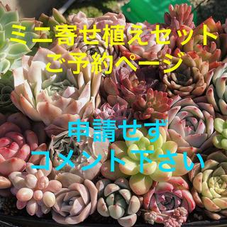❣️ご予約受付中❣️韓国多肉植物 ミニ寄せ植えセットご予約ページ(その他)