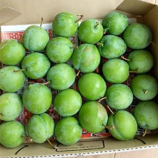 山形県産 青スモモ 摘果 すもも 箱込1.2kg