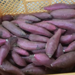 【紫陽凛様専用】すずほっくり 5キロ(野菜)