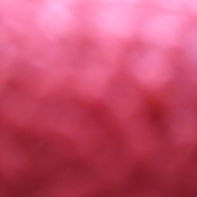 早霧せいな お茶会 DVD 宝塚 前田慶次 エンタメ/ホビーのDVD/ブルーレイ(その他)の商品写真