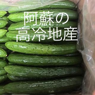 阿蘇のきゅうり 1.5kg 即購入OK 次回発送7月23日(野菜)