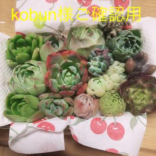 kobun様ご確認用  ミニ寄せ植え16種セット(その他)
