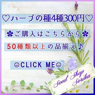 (713B)全54種♪ ハーブの種 お好きな物 4種類 セット(その他)
