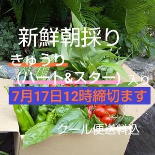 野菜箱詰め【野菜おまかせ♪おためし野菜セット】新鮮朝採り