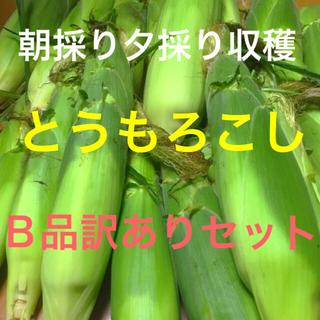 B品訳あり新鮮生野菜果物広島県産自家製とうもろこし皮付き