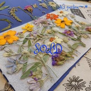 押し花*夏の小花とニゲラ、オルレア、ブルースター(ドライフラワー)