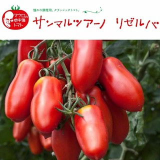 マウロ地中海トマト(サンマルツアーノ)(野菜)