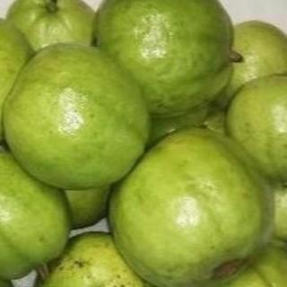 R0814硬1『グァバ(白)1キロ』 果物 サラダ利用可能品種(フルーツ)